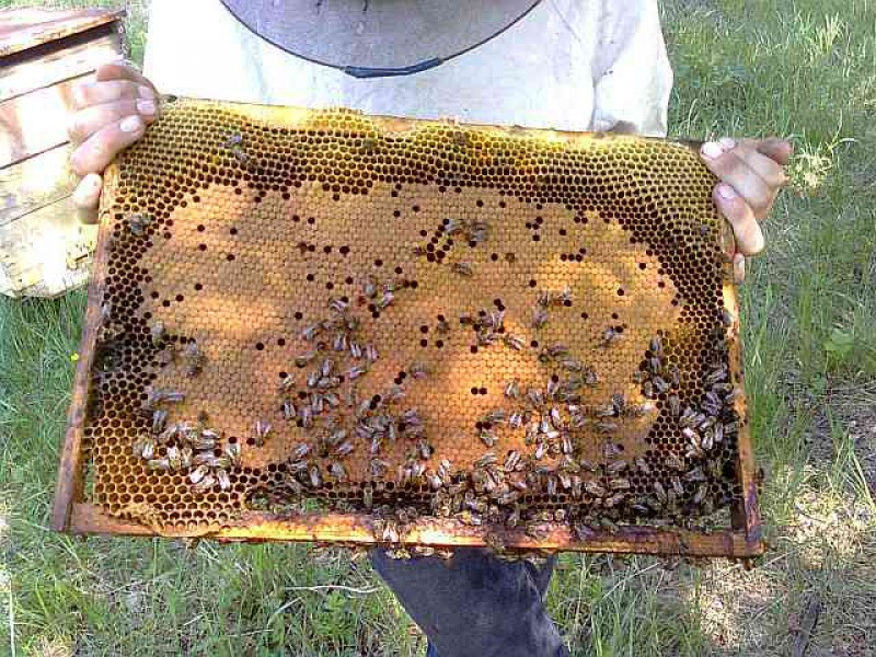 Как сделать что бы пчелы не роились